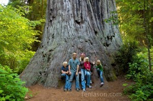"""Big Tree"" Redwood State Forest"