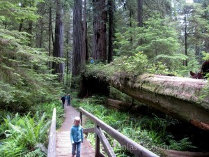 Kids hiking in Redwoods