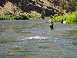 Flyfishing the Green River from the Flaming Gorge UT
