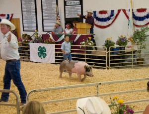 4-H Auction in Gunnison CO