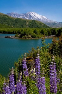 Mount St Helens view from Coldwater Lake hike