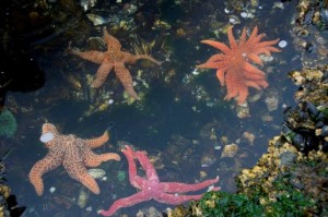 Many different types of starfish