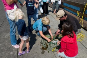 Port Townsend catching crabs