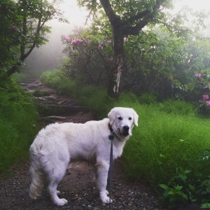 Dakota Hike in mist