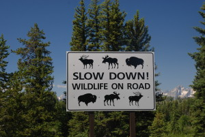 Wildlife on road sign